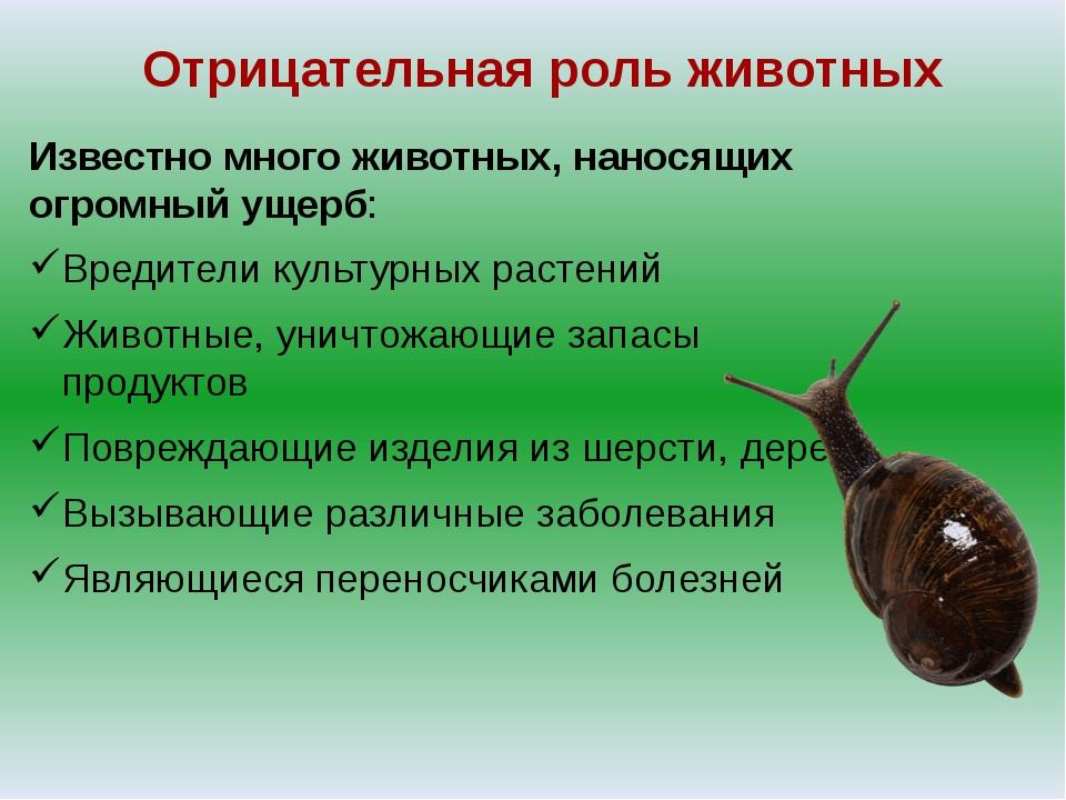 Отрицательная роль животных Известно много животных, наносящих огромный ущерб...