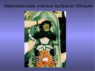 Американские учёные выбрали обезьян