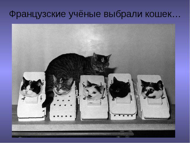 Французские учёные выбрали кошек…