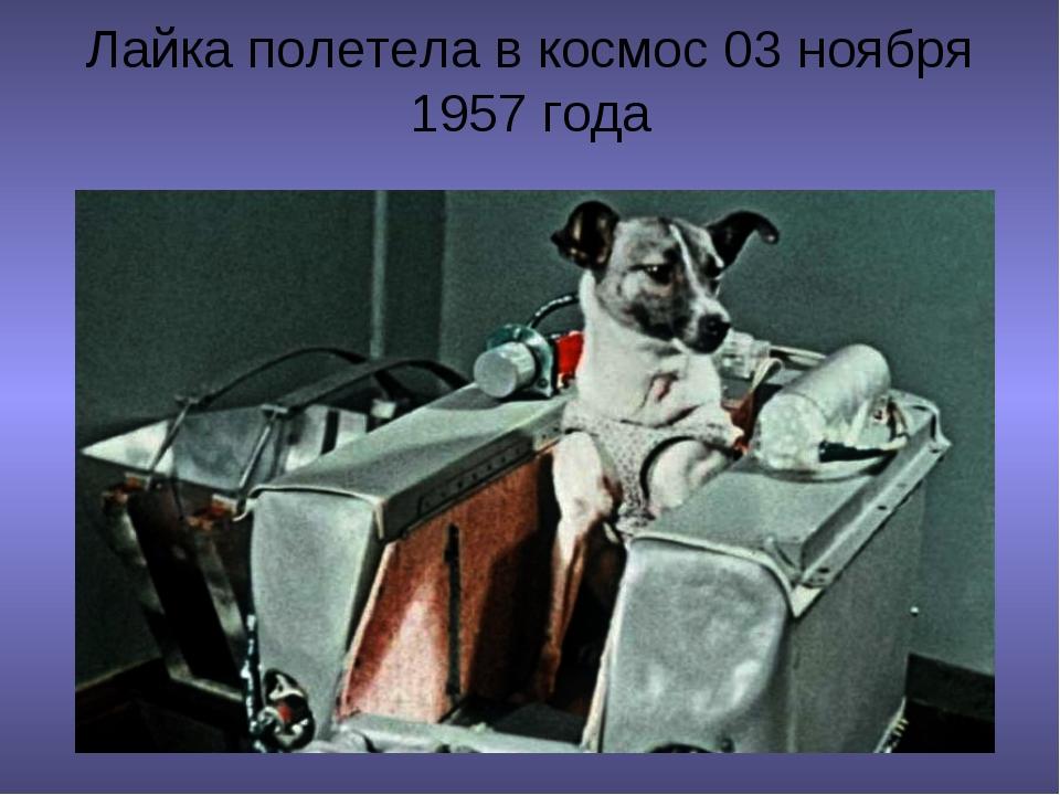 Лайка полетела в космос 03 ноября 1957 года