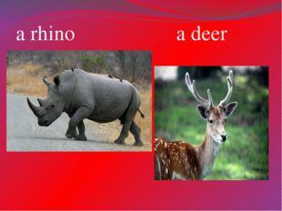 a rhino a deer