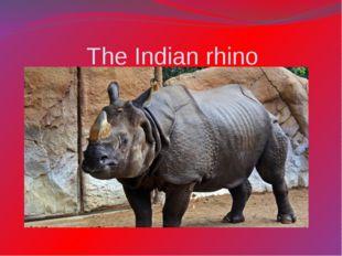 The Indian rhino