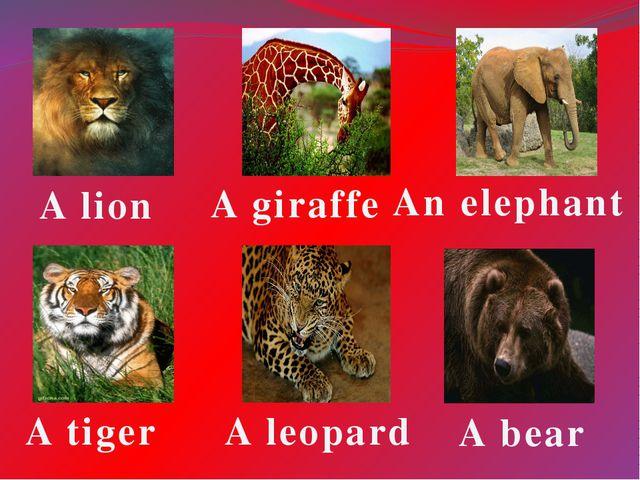 A tiger A giraffe An elephant A lion A leopard A bear