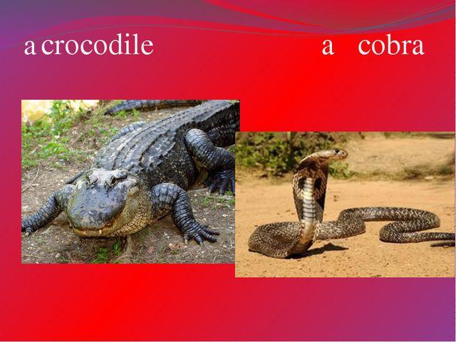 a crocodile a cobra