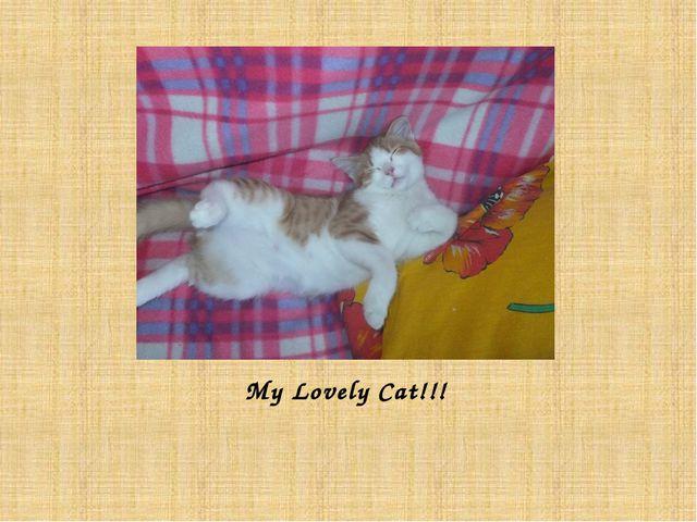 My Lovely Cat!!!