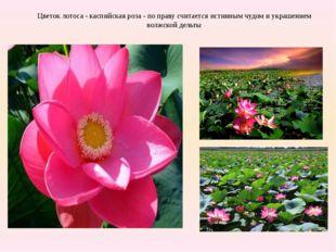 Цветок лотоса - каспийская роза - по праву считается истинным чудом и украше