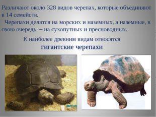 Различают около 328 видов черепах, которые объединяют в 14 семейств. Черепахи