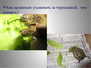 Как правильно ухаживать за черепашкой, чем кормить?