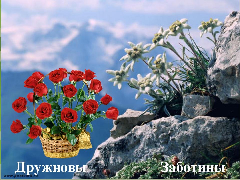 Дружновы Заботины FokinaLida.75@mail.ru