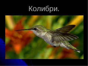 Колибри.