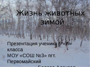 Жизнь животных зимой Презентация ученика 5 «А» класса МОУ «СОШ №3» пгт. Перв