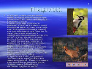 Птицы леса Птицы леса - самая многочисленная группа. У ее представителей суще