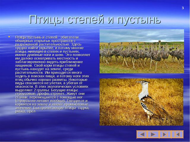 Птицы степей и пустынь Птицы пустынь и степей - обитатели обширных открытых п...