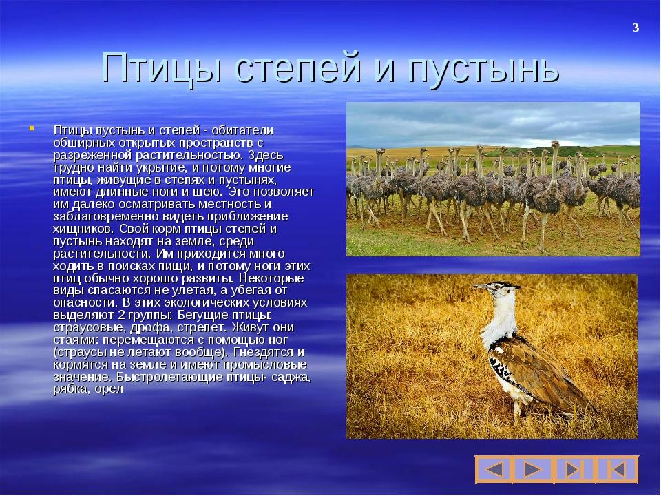 Презентация по биологии на тему Экологические группы птиц  слайда 3 Птицы степей и пустынь Птицы пустынь и степей обитатели обширных открытых п