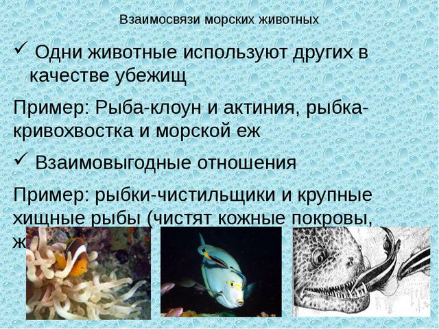 Взаимосвязи морских животных Одни животные используют других в качестве убежи...
