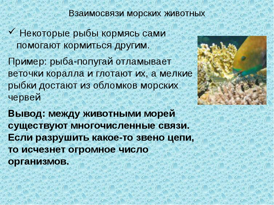Взаимосвязи морских животных Некоторые рыбы кормясь сами помогают кормиться д...