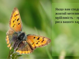 Якщо вам сподобався жовтий метелик, мрійливість – провідна риса вашого характ