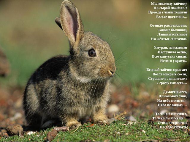 Маленькому зайчику На сырой ложбинке Прежде глазки тешили Белые цветочки…...