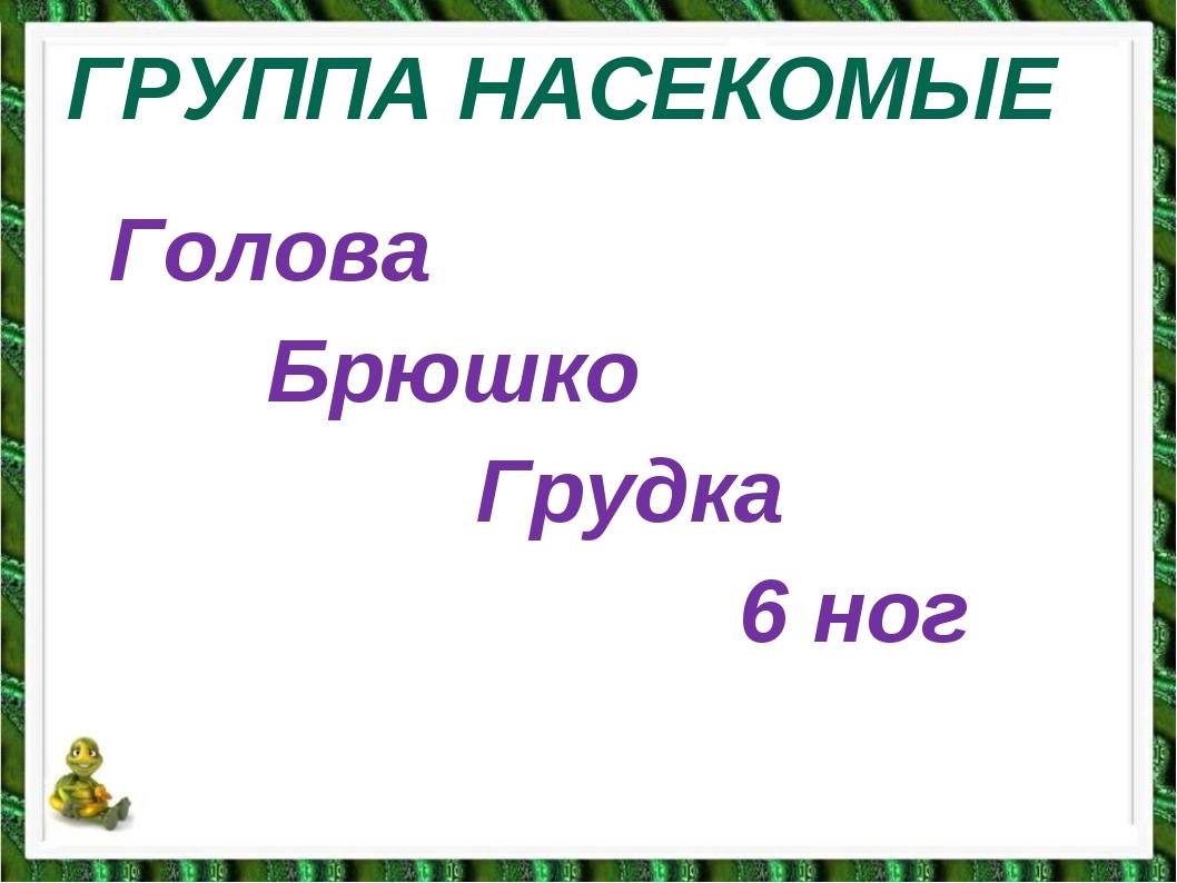 ГРУППА НАСЕКОМЫЕ Голова Брюшко Грудка 6 ног