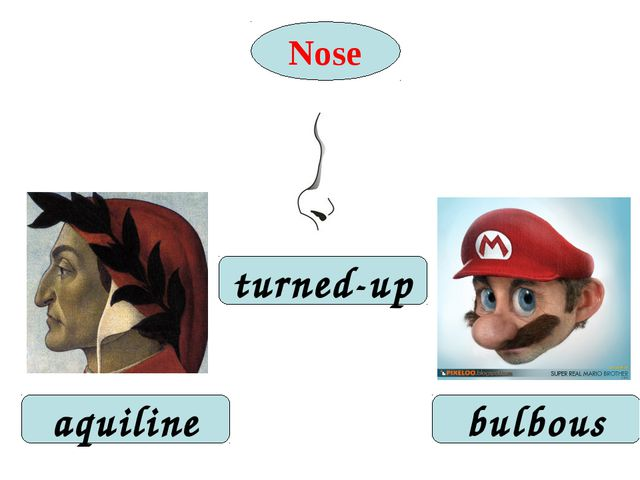 Nose turned-up aquiline bulbous