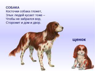 СОБАКА Косточки собака гложет, Злых людей кусает тоже – Чтобы не забрался вор