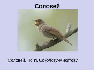 Соловей Соловей. По И. Соколову-Микитову