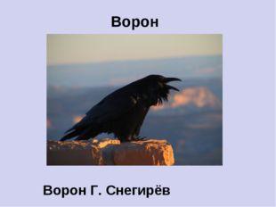 Ворон Ворон Г. Снегирёв