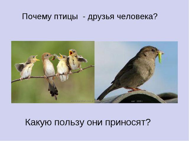 Почему птицы - друзья человека? Какую пользу они приносят?