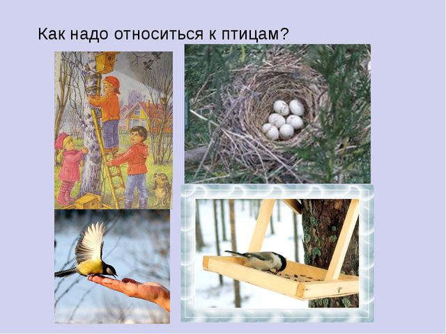 Как надо относиться к птицам?