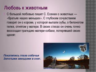 Любовь к животным С большой любовью пишет С. Есенин о животных — «братьях наш