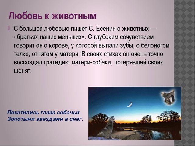 Любовь к животным С большой любовью пишет С. Есенин о животных — «братьях наш...