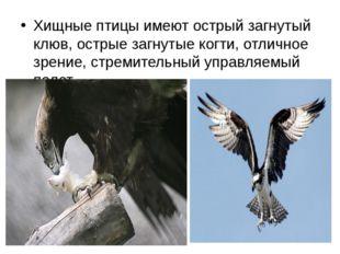 Хищные птицы имеют острый загнутый клюв, острые загнутые когти, отличное зрен
