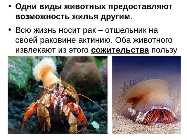 Одни виды животных предоставляют возможность жилья другим. Всю жизнь носит ра...