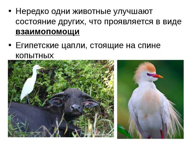 Нередко одни животные улучшают состояние других, что проявляется в виде взаим...
