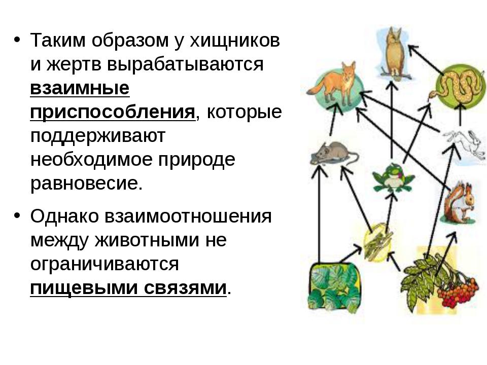 Таким образом у хищников и жертв вырабатываются взаимные приспособления, кото...