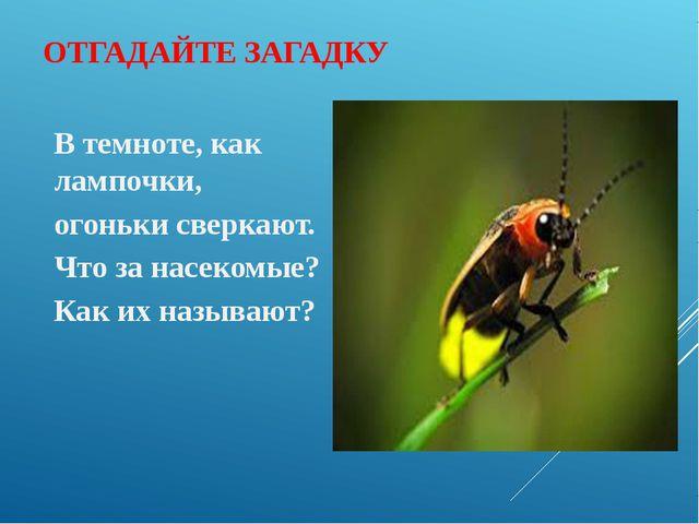 ОТГАДАЙТЕ ЗАГАДКУ В темноте, как лампочки, огоньки сверкают. Что за насекомые...