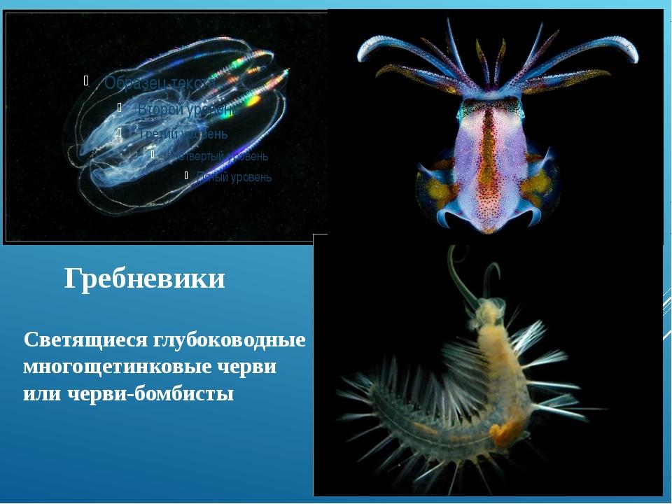 Гребневики Светящиеся глубоководные многощетинковые черви или черви-бомбисты