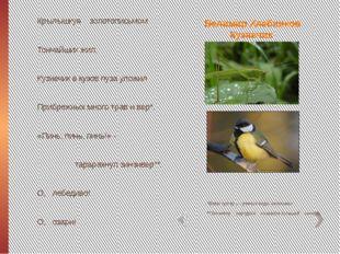 Велимир Хлебников Кузнечик *Веры (устар.) – разные виды насекомых. **Зинзивер