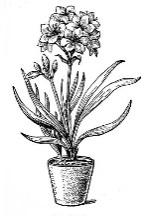 http://flowerlib.ru/books/item/f00/s00/z0000032/pic/000032.jpg
