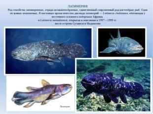 ЛАТИМЕРИЯ Род семейства латимериевых, отряда целакантообразных, единственный