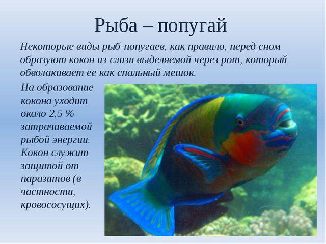 Рыба – попугай Некоторые виды рыб-попугаев, как правило, перед сном образуют...