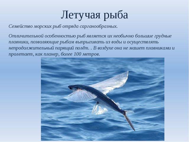 Летучая рыба Семейство морских рыб отряда сарганообразных. Отличительной особ...