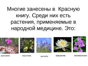 Многие занесены в Красную книгу. Среди них есть растения, применяемые в народ