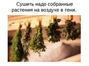 Сушить надо собранные растения на воздухе в тени.