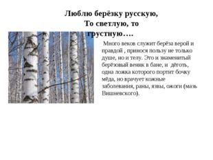 ,). Люблю берёзку русскую, То светлую, то грустную…. Много веков служит берё