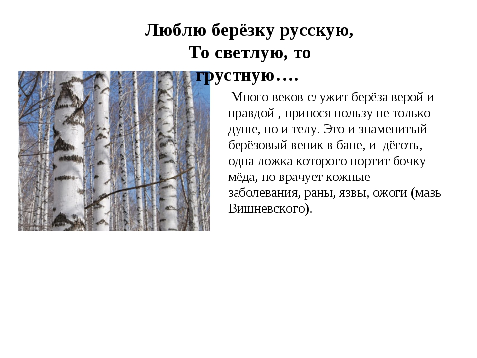 ,). Люблю берёзку русскую, То светлую, то грустную…. Много веков служит берё...