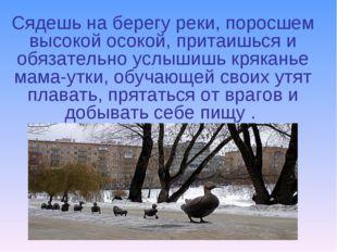 Сядешь на берегу реки, поросшем высокой осокой, притаишься и обязательно услы