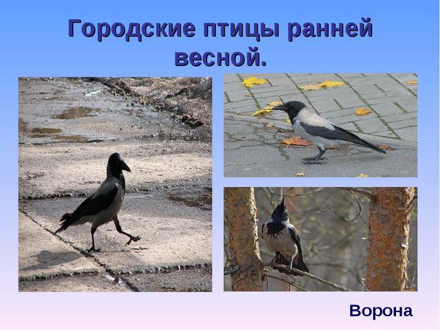 Городские птицы ранней весной.