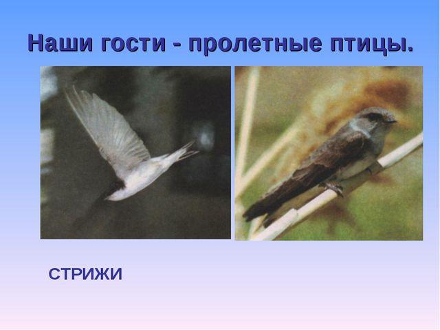Наши гости - пролетные птицы.