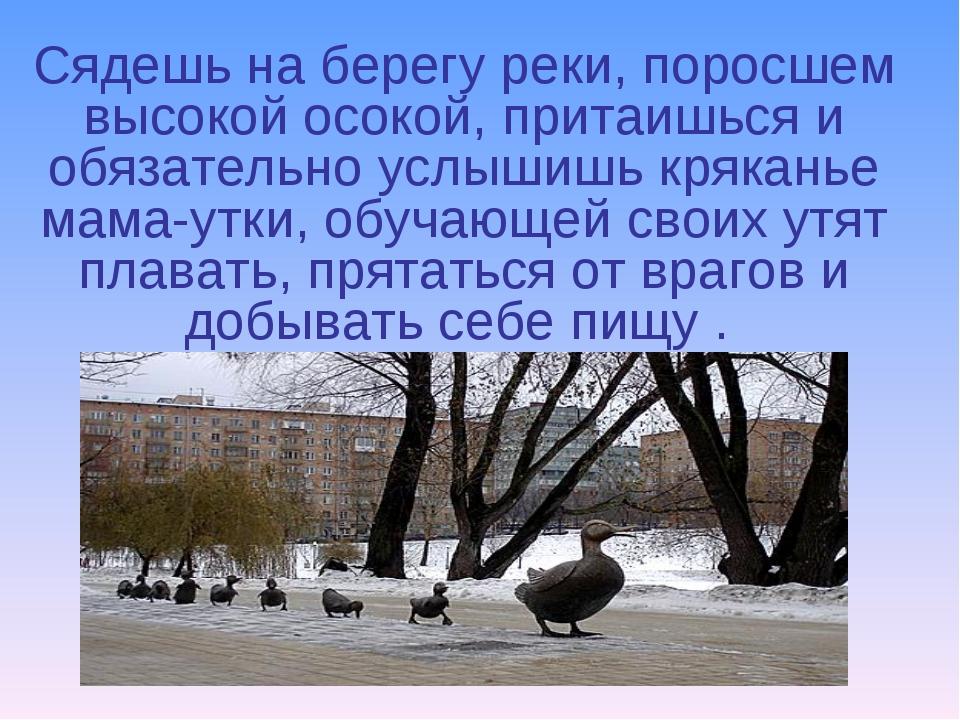 Сядешь на берегу реки, поросшем высокой осокой, притаишься и обязательно услы...